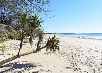 Bundaberg Region Coastal Hazard Adaptation Strategy