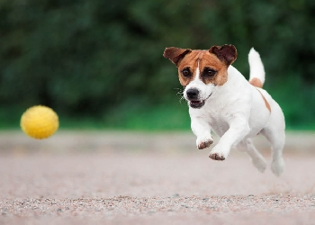 Dog Off-Leash areas - Stage 2: proposed areas