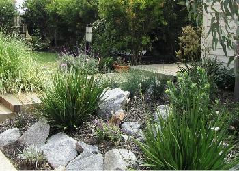 House with Australian native garden